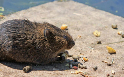 Food Businesses and the Menace of Food Pests (Part I)
